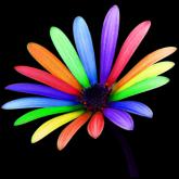 Color Splasher - Recolor images free